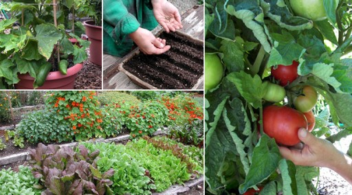 12 tips to grow your own veggie garden