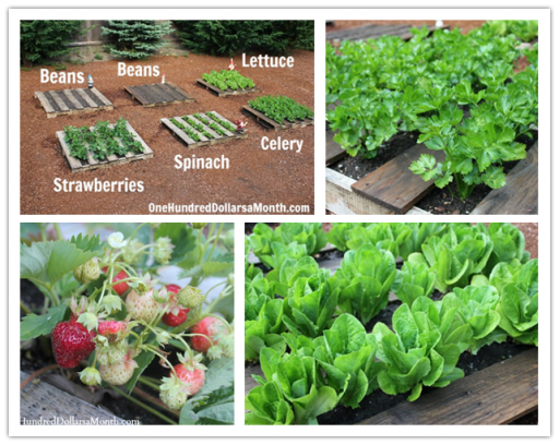 How to DIY wood pallet garden