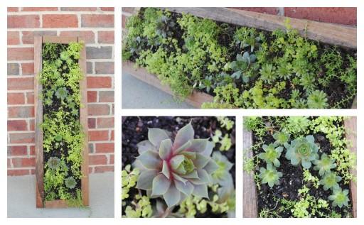 DIY Hanging Succulent Garden Tutorial