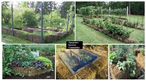 How To Grow Fresh Fruit And Vegetables With Straw Bales