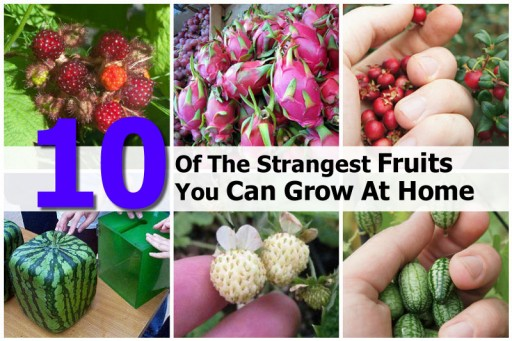 10 Weirdest Fruits That You Can Grow At Home