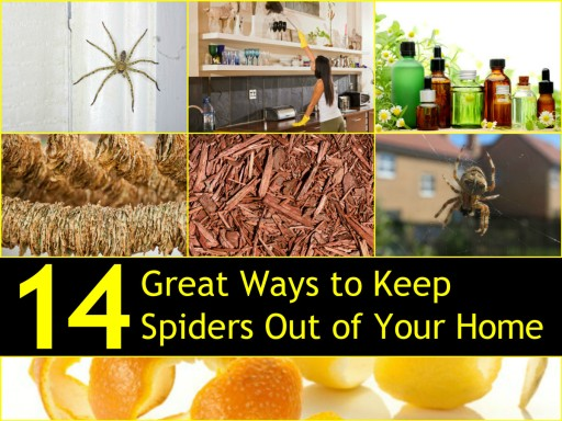 14 Natural Ways To Keep Spiders Out Your Home