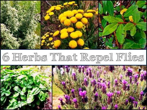 6 Fragrant Garden Herbs That Repel Flies