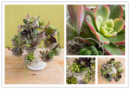 Cupcake Stand Succulent Centrepiece Decoration Idea