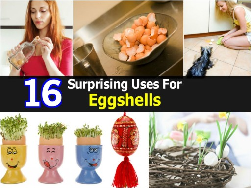 16 Surprising Uses For Eggshells