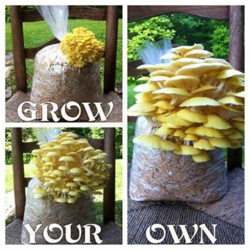How To Grow Your Own Mushroom At Home