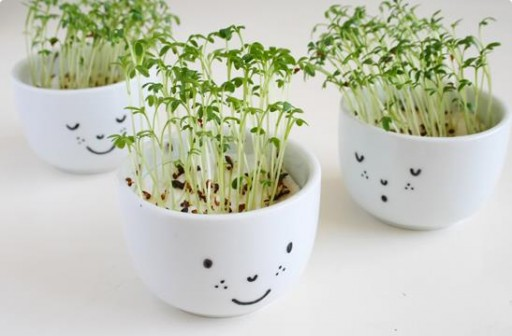 How To Make Cute Cress Cups With A Face
