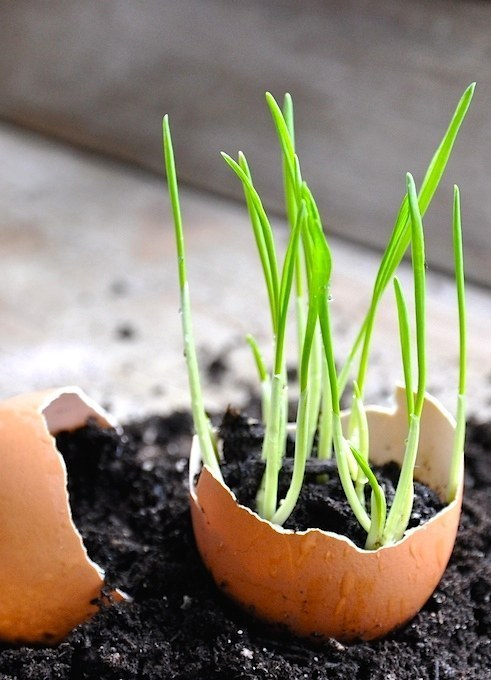These DIY Gardening Hacks Make Your Garden The Talk Of The Town 2