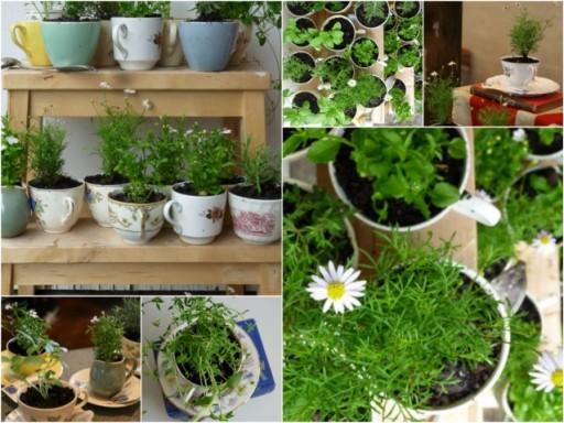 Adorable Teacup Planters