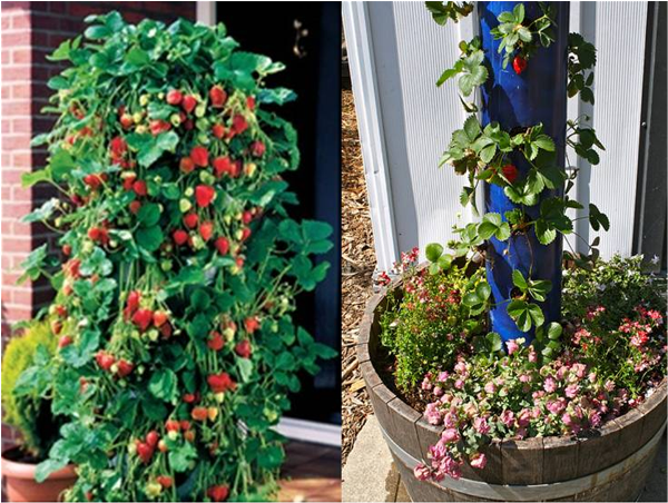 DIY PVC Tube Vertical Strawberry Planters 2