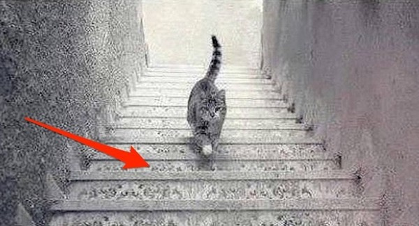 Is The Cat Going Up Or Down 1