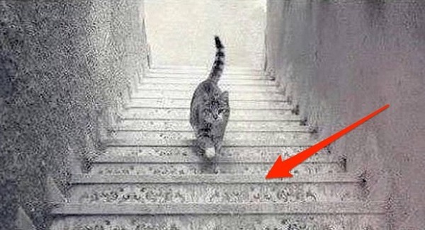Is The Cat Going Up Or Down 2