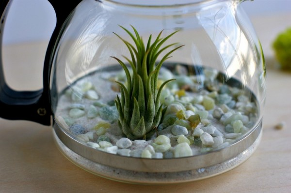 Would You Like To Have A Cup Of Terrarium 2