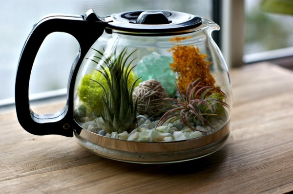 Would You Like To Have A Cup Of Terrarium 3
