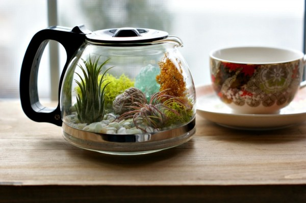 Would You Like To Have A Cup Of Terrarium